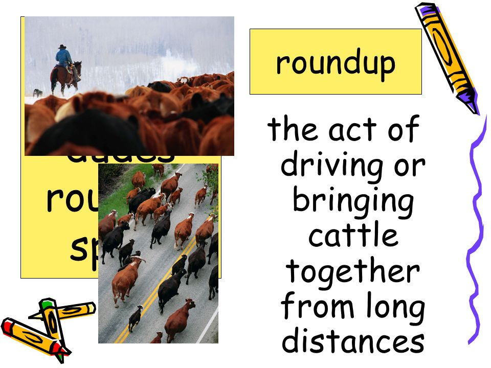 the act of driving or bringing cattle together from long distances roundup bawling coyote dudes roundup spurs