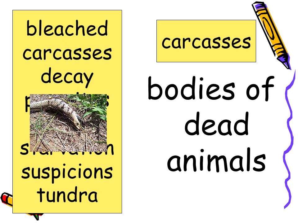 process of rotting decay bleached carcasses decay parasites scrawny starvation suspicions tundra