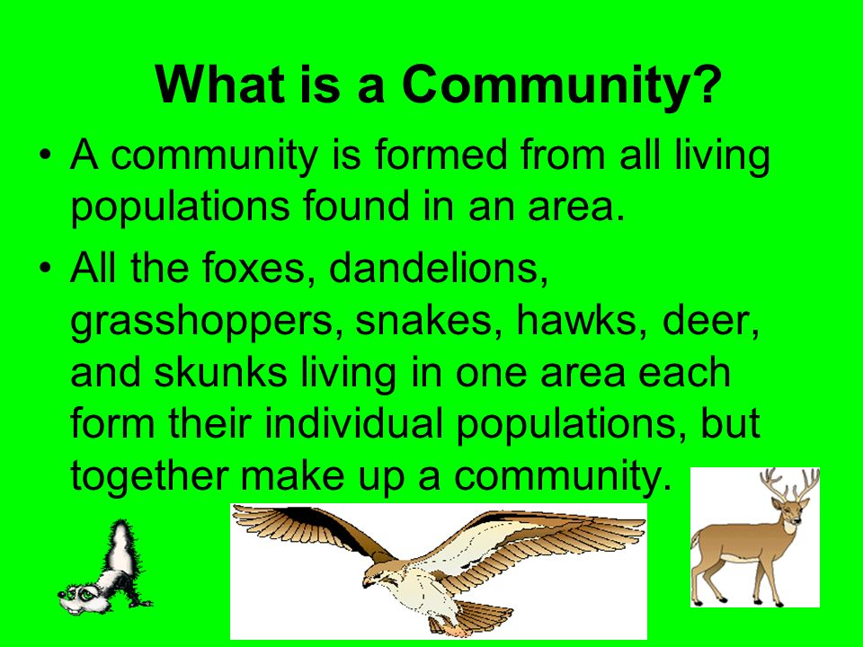 What is a Community? A community is formed from all living populations found in an area. All the foxes, dandelions, grasshoppers, snakes, hawks, deer,