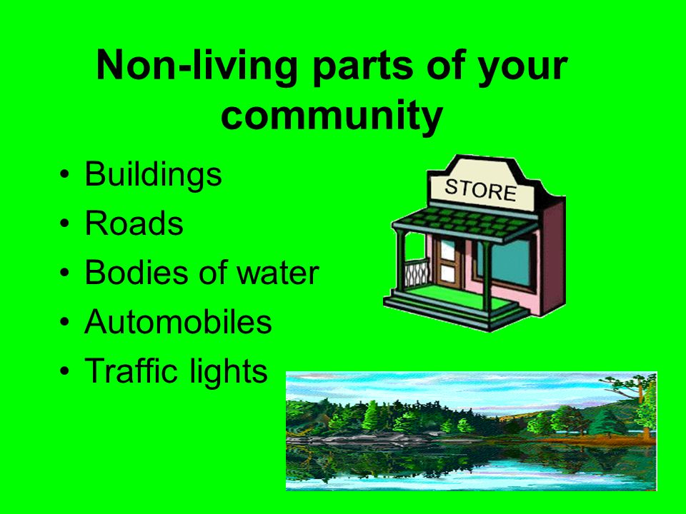 Non-living parts of your community Buildings Roads Bodies of water Automobiles Traffic lights