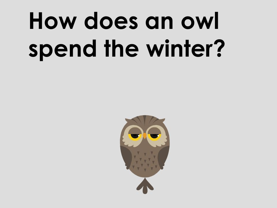 How does an owl spend the winter?