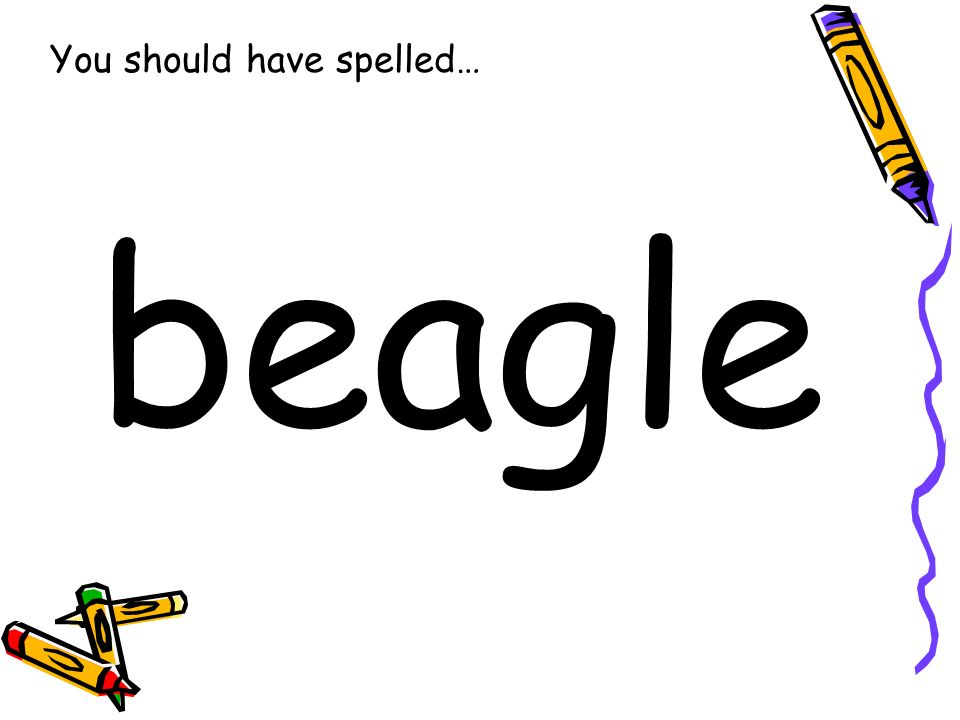 You should have spelled… beagle