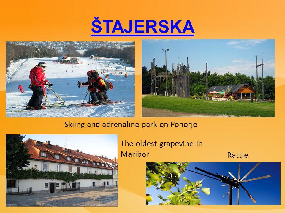 ŠTAJERSKA Skiing and adrenaline park on Pohorje The oldest grapevine in Maribor Rattle