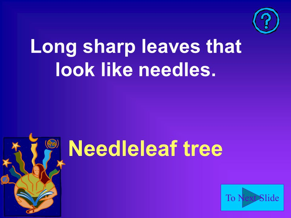 To Next Slide Needleleaf tree Long sharp leaves that look like needles.