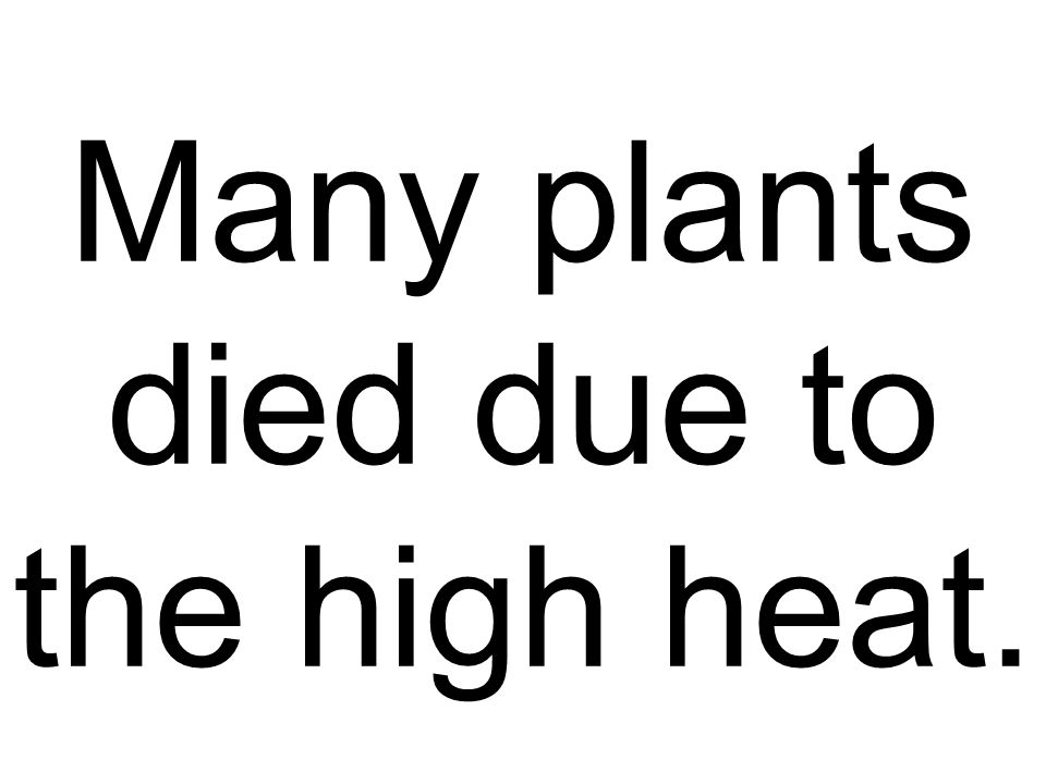Many plants died due to the high heat.