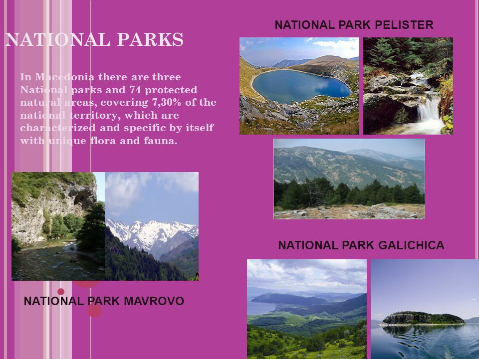 NATIONAL PARKS In Macedonia there are three National parks and 74 protected natural areas, covering 7,30% of the national territory, which are characterized and specific by itself with unique flora and fauna.