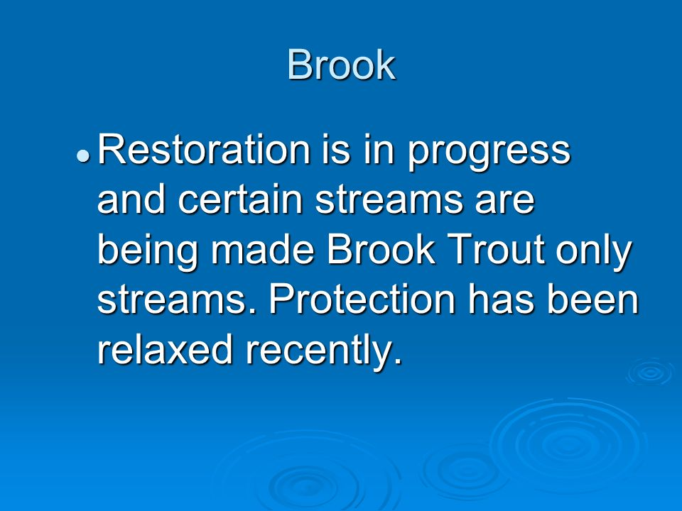 Brook Restoration is in progress and certain streams are being made Brook Trout only streams.