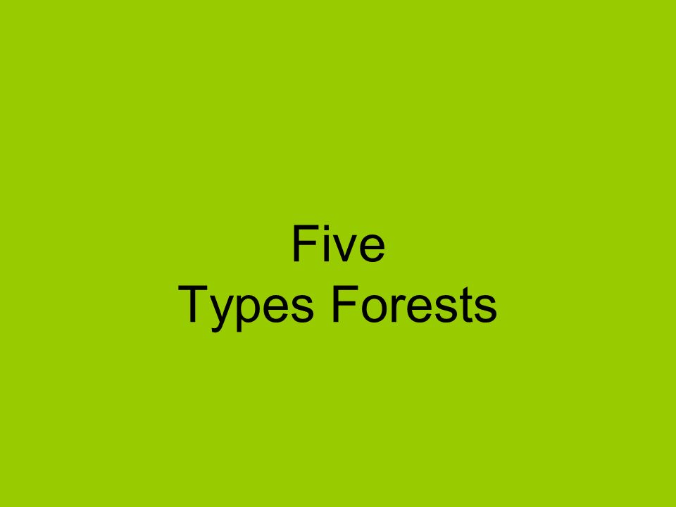 Five Types Forests