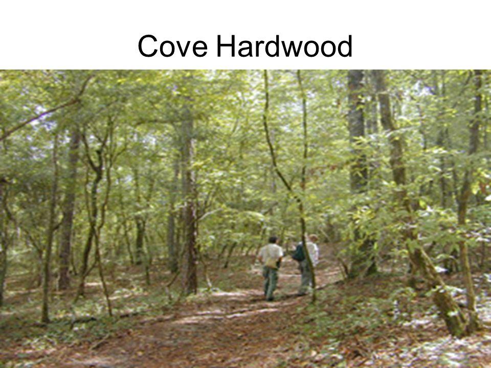 Cove Hardwood