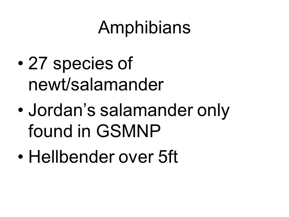 Amphibians 27 species of newt/salamander Jordans salamander only found in GSMNP Hellbender over 5ft