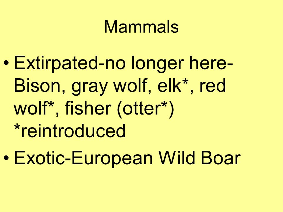 Mammals Extirpated-no longer here- Bison, gray wolf, elk*, red wolf*, fisher (otter*) *reintroduced Exotic-European Wild Boar