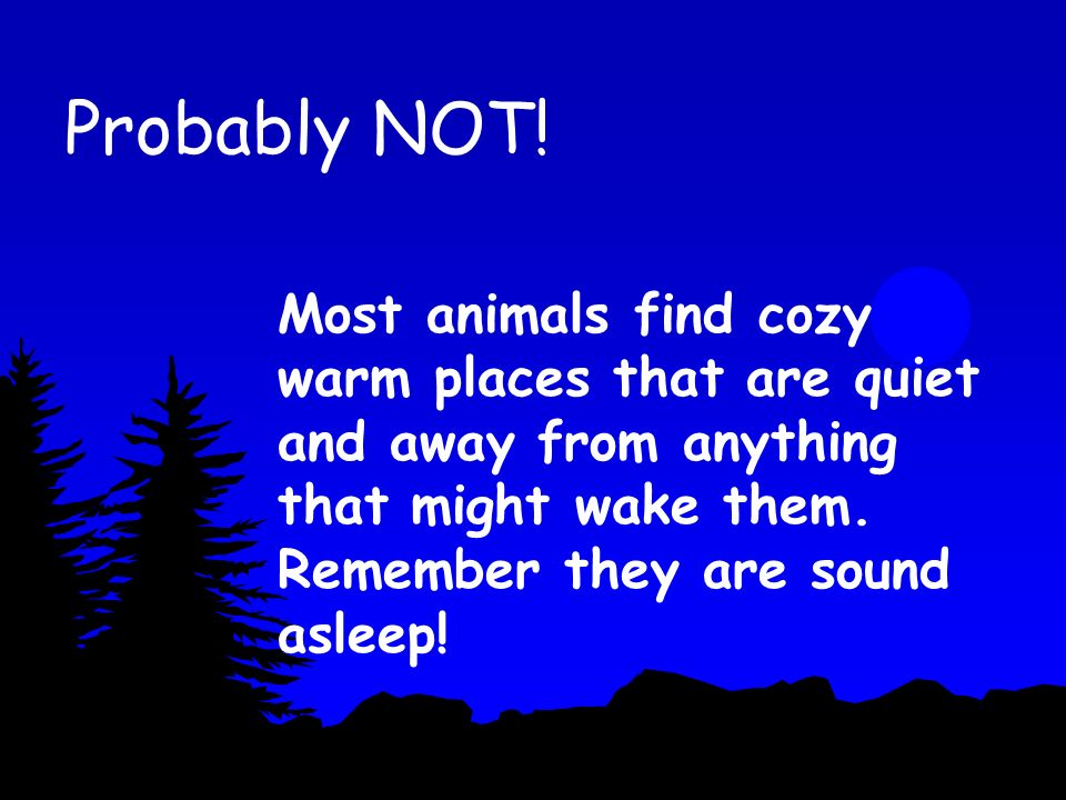 Where do these animals sleep? Under your bed? In your back pocket? In your tree house?