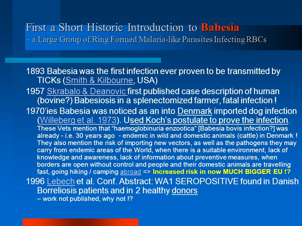First a Short Historic Introduction to Babesia – a Large Group of Ring Formed Malaria-like Parasites Infecting RBCs 1893 Babesia was the first infection ever proven to be transmitted by TICKs (Smith & Kilbourne, USA)Smith & Kilbourne 1957 Skrabalo & Deanovic first published case description of human (bovine ) Babesiosis in a splenectomized farmer, fatal infection !Skrabalo & Deanovic 1970ies Babesia was noticed as an into Denmark imported dog infection (Willeberg et al.
