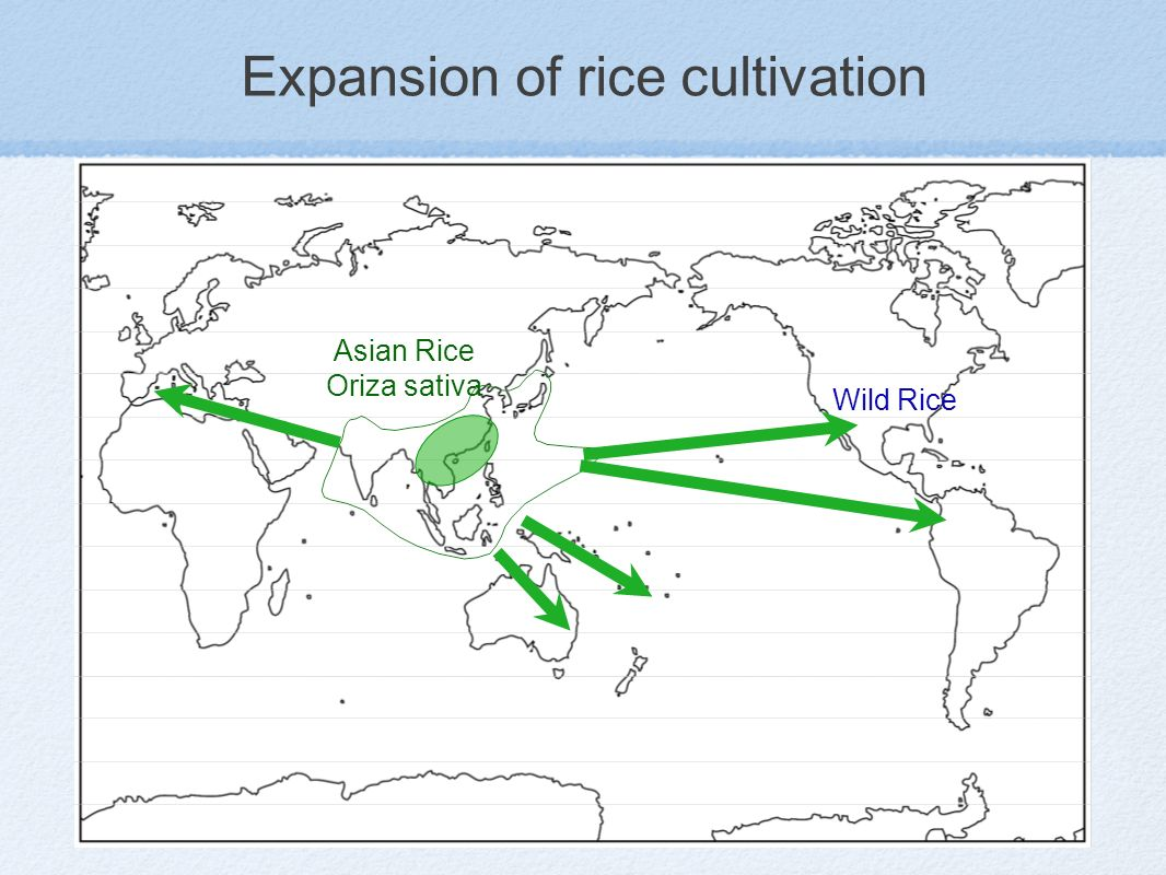 Expansion of rice cultivation Asian Rice Oriza sativa Wild Rice