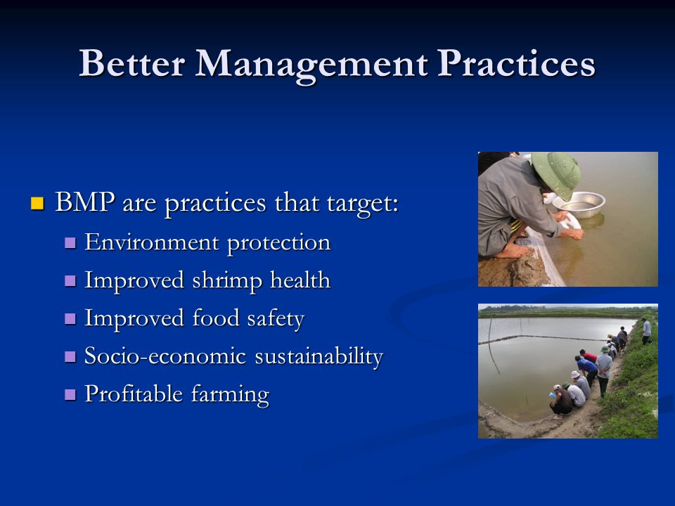 Better Management Practices BMP are practices that target: BMP are practices that target: Environment protection Environment protection Improved shrim