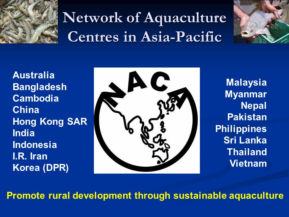 Network of Aquaculture Centres in Asia-Pacific Australia Bangladesh Cambodia China Hong Kong SAR India Indonesia I.R. Iran Korea (DPR) Malaysia Myanma