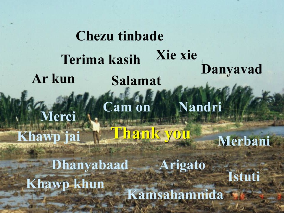 Thank you Merbani Danyavad Dhanyabaad Kamsahamnida Arigato Khawp khun Khawp jai Ar kun Terima kasih Cam onNandri Xie xie Salamat Chezu tinbade Istuti