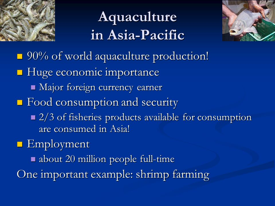 Aquaculture in Asia-Pacific 90% of world aquaculture production! 90% of world aquaculture production! Huge economic importance Huge economic importanc