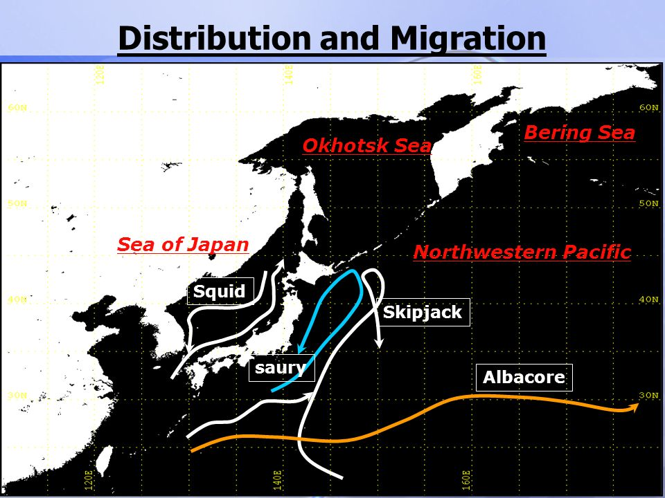 Distribution and Migration Okhotsk Sea Bering Sea Northwestern Pacific Skipjack Squid saury Albacore Sea of Japan