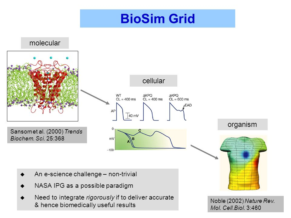 BioSim Grid u An e-science challenge – non-trivial u NASA IPG as a possible paradigm u Need to integrate rigorously if to deliver accurate & hence biomedically useful results Noble (2002) Nature Rev.