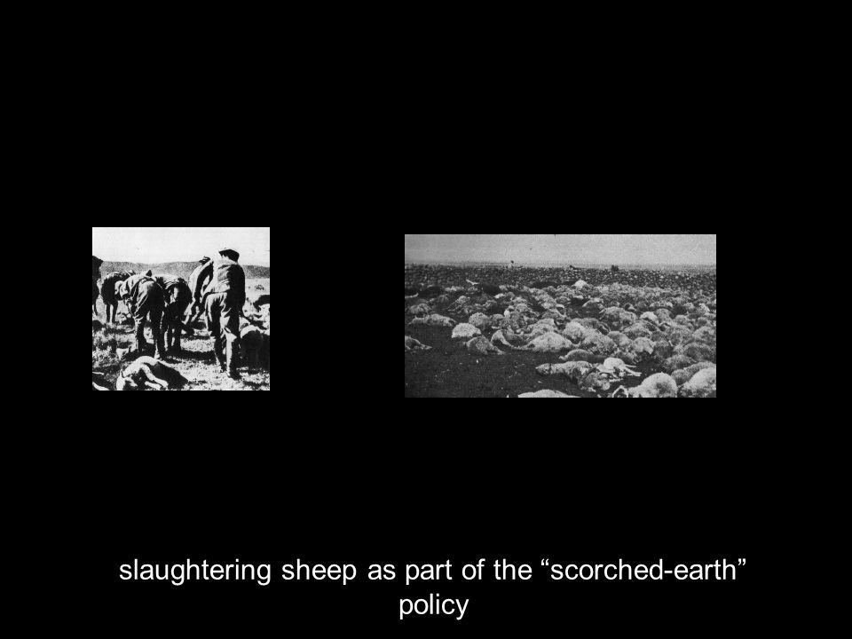 slaughtering sheep as part of the scorched-earth policy