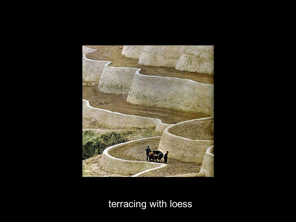 terracing with loess