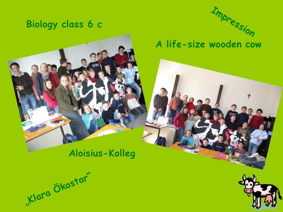 Impression Aloisius-Kolleg Biology class 6 c A life-size wooden cow Klara Ökostar