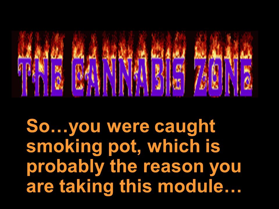 So…you were caught smoking pot, which is probably the reason you are taking this module…