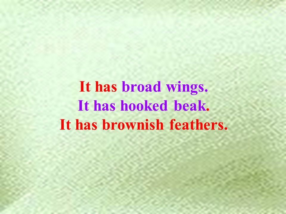 It has broad wings. It has hooked beak. It has brownish feathers.