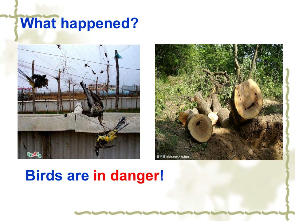 What happened Birds are in danger!