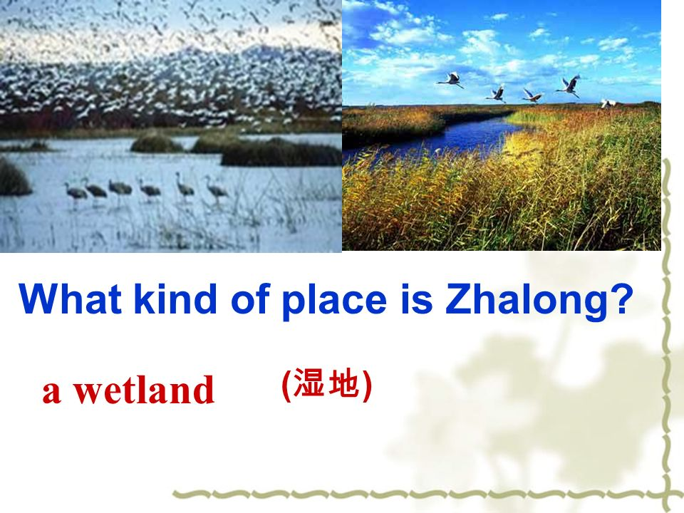 a wetland What kind of place is Zhalong ( )