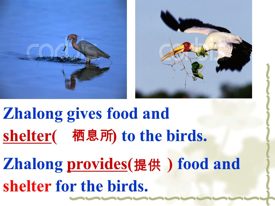 Zhalong gives food and shelter( ) to the birds. Zhalong provides( ) food and shelter for the birds.