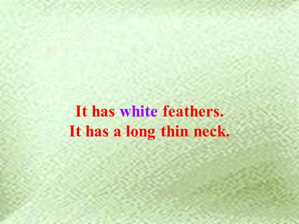 It has white feathers. It has a long thin neck.