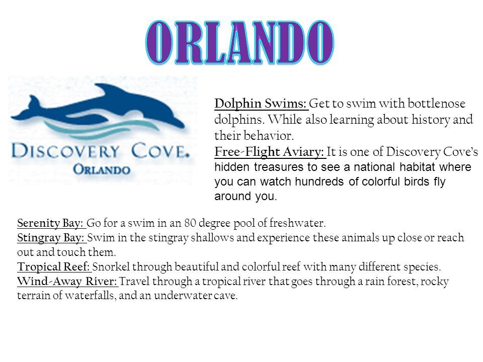 Dolphin Swims: Get to swim with bottlenose dolphins. While also learning about history and their behavior. Free-Flight Aviary: It is one of Discovery