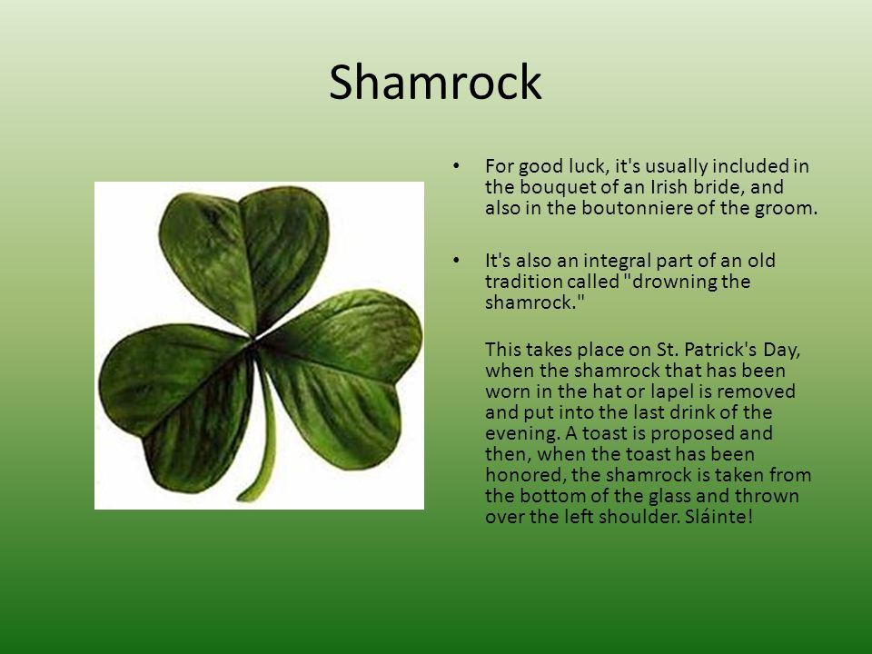 Shamrock For good luck, it's usually included in the bouquet of an Irish bride, and also in the boutonniere of the groom. It's also an integral part o