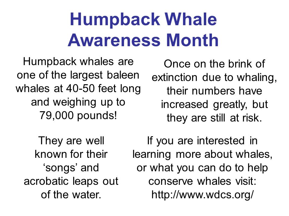 Humpback Whale Awareness Month Humpback whales are one of the largest baleen whales at feet long and weighing up to 79,000 pounds.