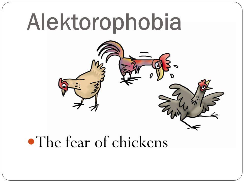 The fear of chickens Alektorophobia