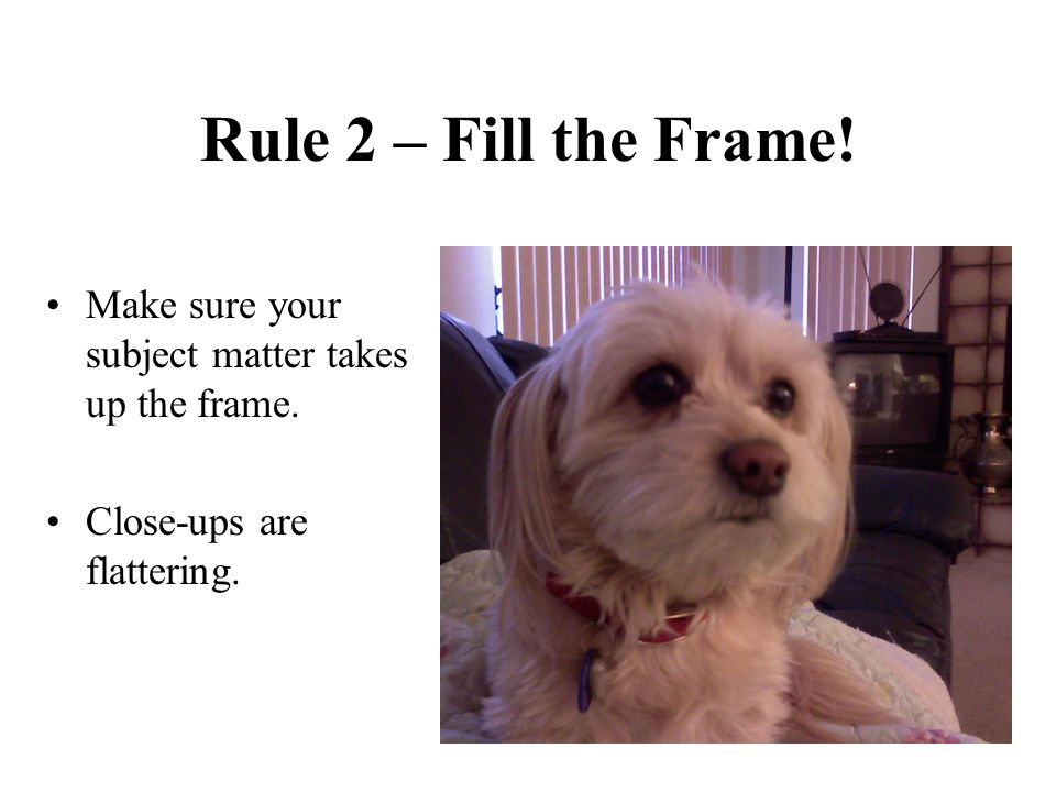 Rule 2 – Fill the Frame. Make sure your subject matter takes up the frame.