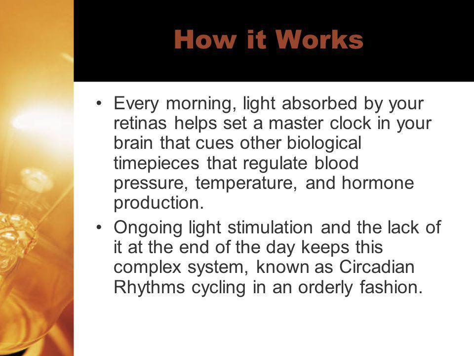 How it Works Every morning, light absorbed by your retinas helps set a master clock in your brain that cues other biological timepieces that regulate
