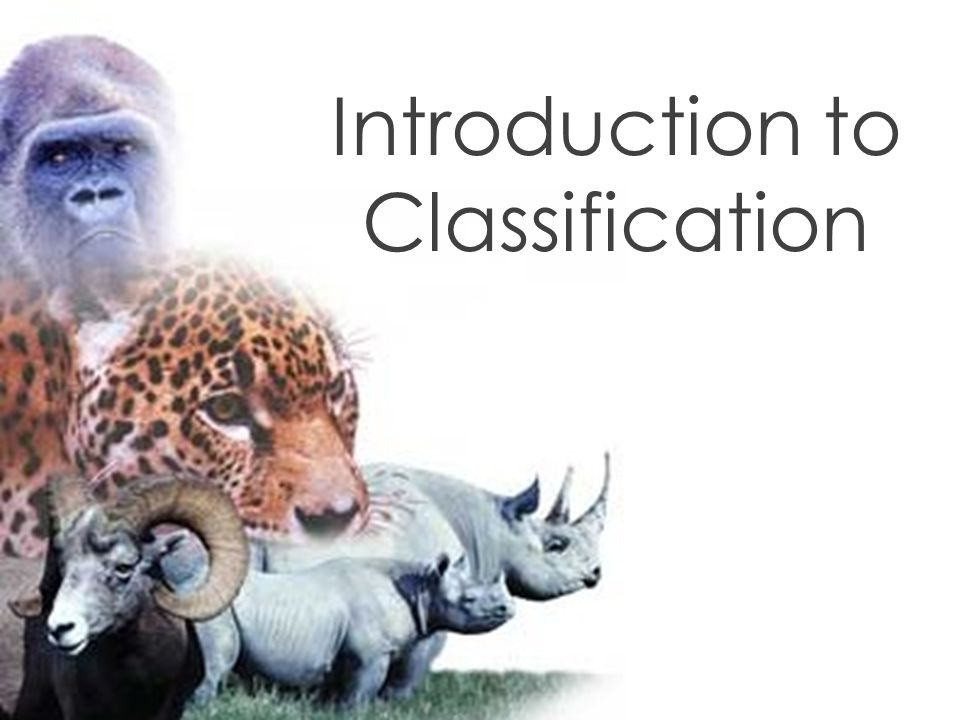 A.What is taxonomy . The branch of biology that groups organisms based on common characteristics.