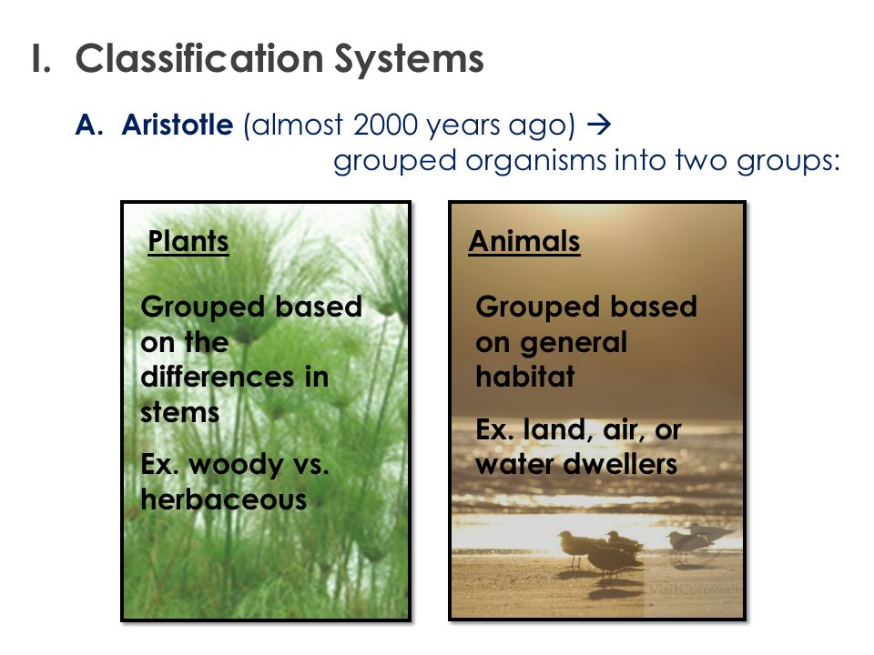 Animals A. Aristotle (almost 2000 years ago) grouped organisms into two groups: Grouped based on general habitat Ex. land, air, or water dwellers Plan