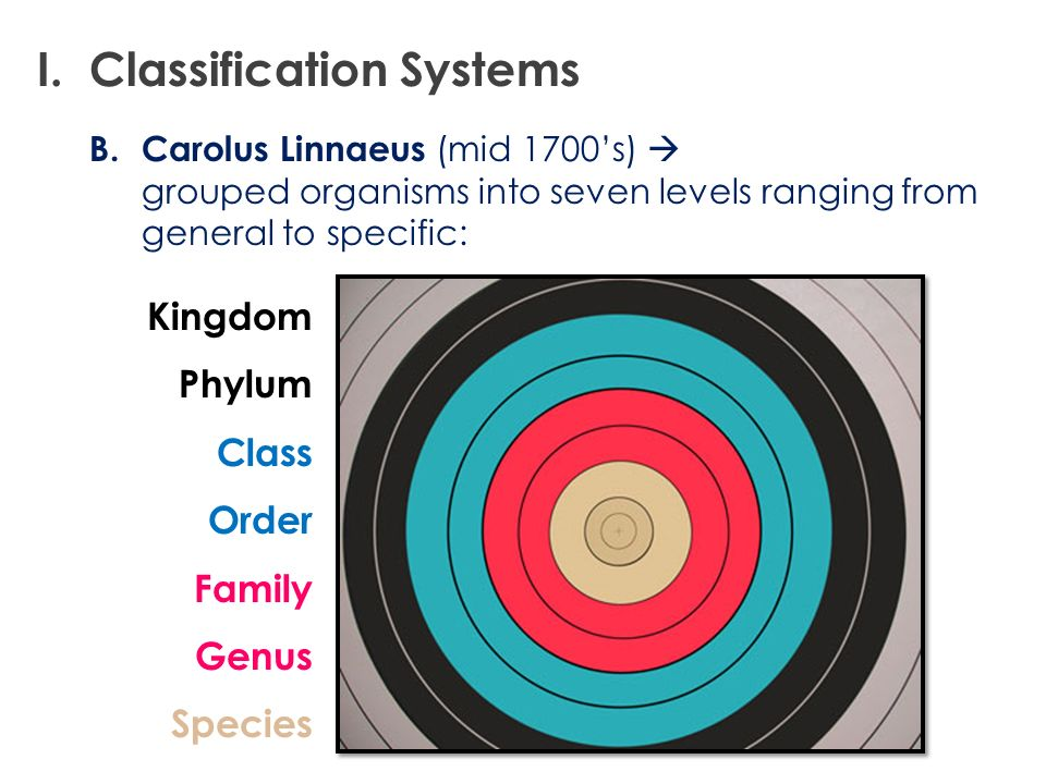 B.Carolus Linnaeus (mid 1700s) grouped organisms into seven levels ranging from general to specific: I. Classification Systems Kingdom Phylum Class Or