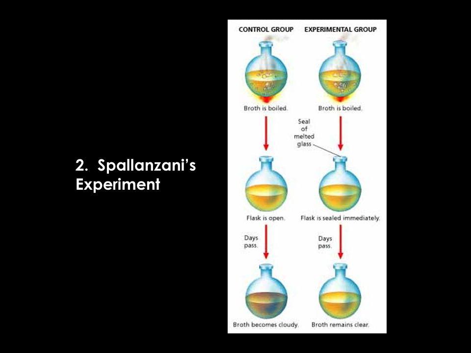 2. Spallanzanis Experiment