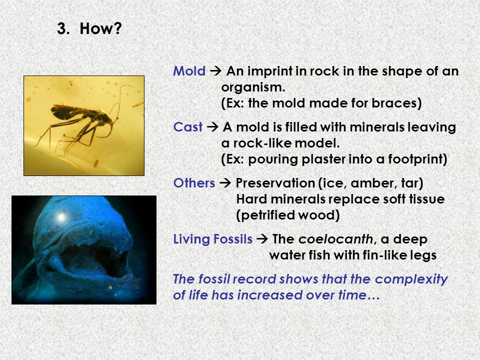 3. How? Mold An imprint in rock in the shape of an organism. (Ex: the mold made for braces) Cast A mold is filled with minerals leaving a rock-like mo