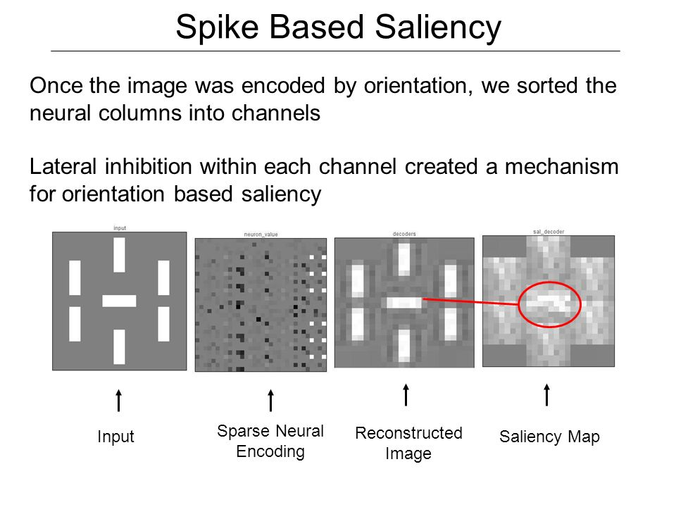 Spike Based Saliency Input Sparse Neural Encoding Reconstructed Image Once the image was encoded by orientation, we sorted the neural columns into channels Lateral inhibition within each channel created a mechanism for orientation based saliency Saliency Map