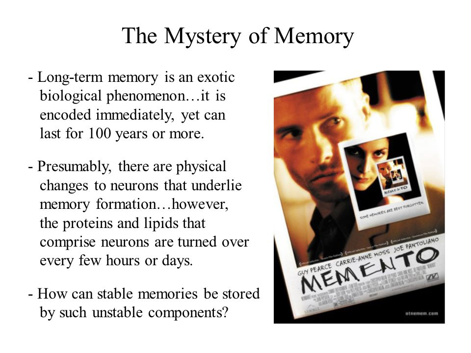 Synapses & Memory Capacity - The legendary Spanish neuroanatomist Santiago Ramon y Cajal, who showed that the brain is not a syncytium but is in fact made up of discrete cells, postulated that synaptic connections between neurons were probably the sites of memory storage.