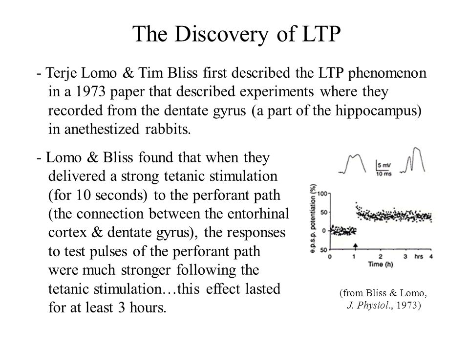 Hippocampal Slices - Following the report from Bliss and Lomo, there were only a handful of papers about LTP over the next few years, mainly because it was very difficult to record from intact animals.