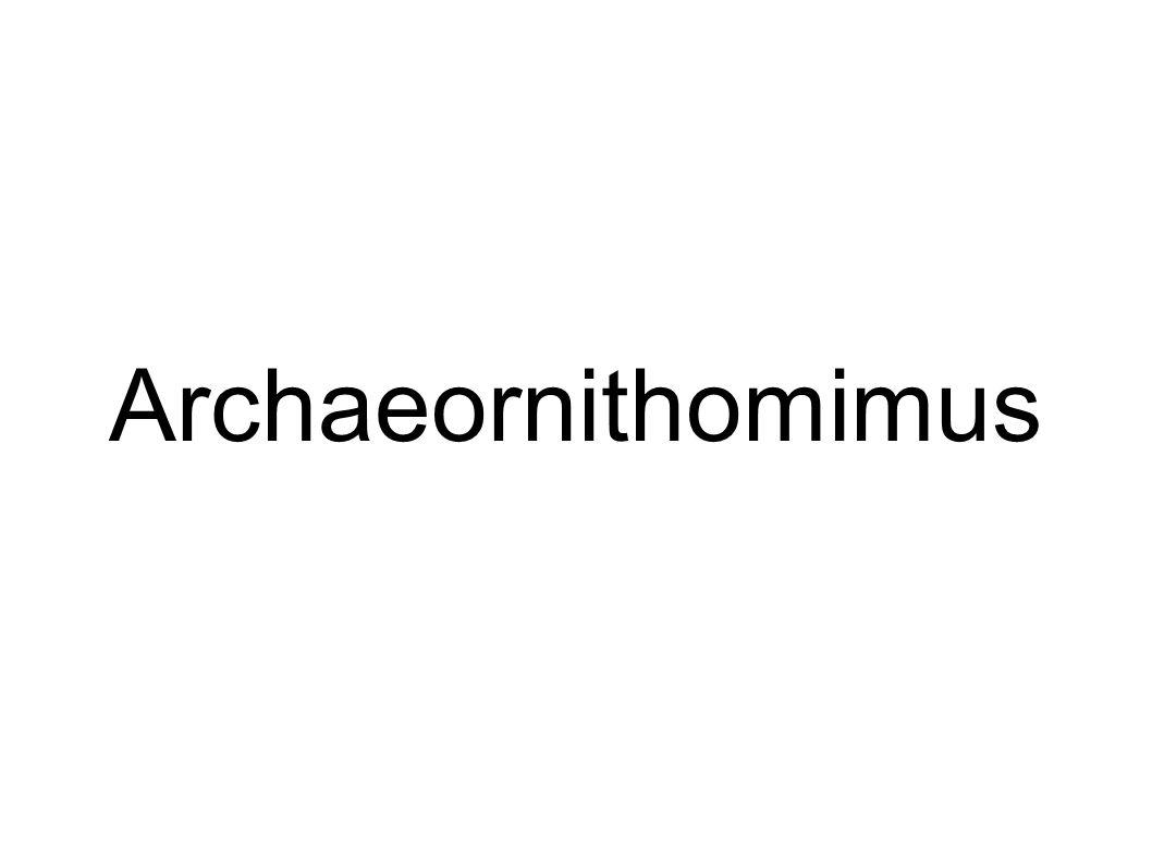 Archaeornithomimus