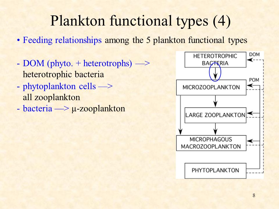 8 Feeding relationships among the 5 plankton functional types Plankton functional types (4) -DOM (phyto.