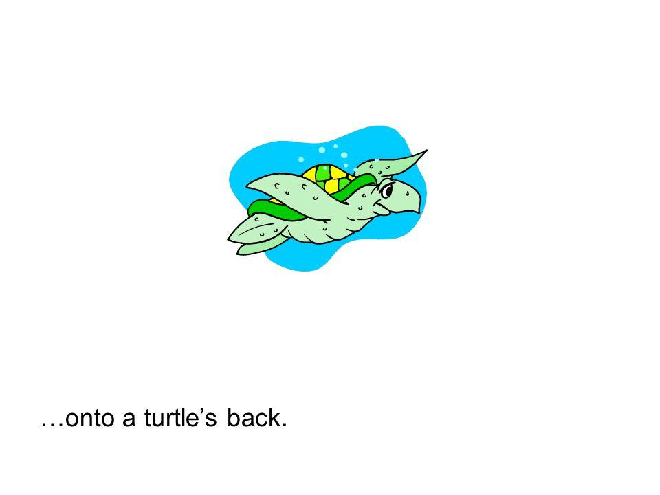 …onto a turtles back.